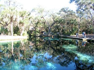 Juniper Springs swimming is some of the best in Florida